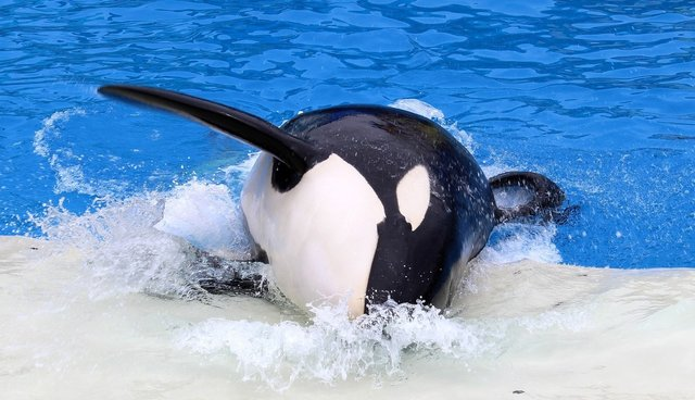 China Investor Überschuldet Seaworld